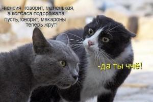 Коты и кошечки