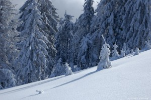 Красавица — Зима