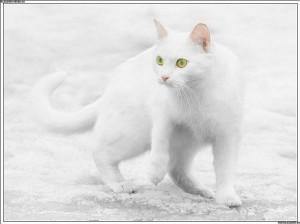 Белый кот на белом снегу