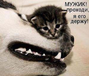 Давай дружить