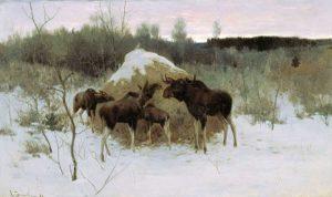 Лоси едят сено зимой